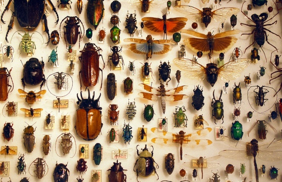Insect collection. Photographs by Barta IV